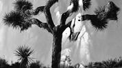 岸 幸太写真展「Joshua tree」