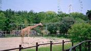 舞山秀一写真展「ZOO -House of Giraffe-」