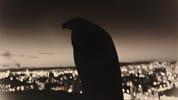 山本昌男写真展「-どの鳥にも、これを限りの旅がある-」